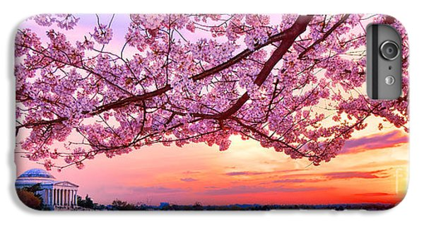 Jefferson Memorial iPhone 6s Plus Case - Glorious Sunset Over Cherry Tree At The Jefferson Memorial  by Olivier Le Queinec