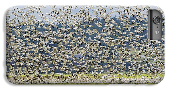 Goose Storm IPhone 6s Plus Case by Mike Dawson