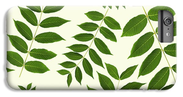 Botanical Pattern IPhone 6s Plus Case by Christina Rollo