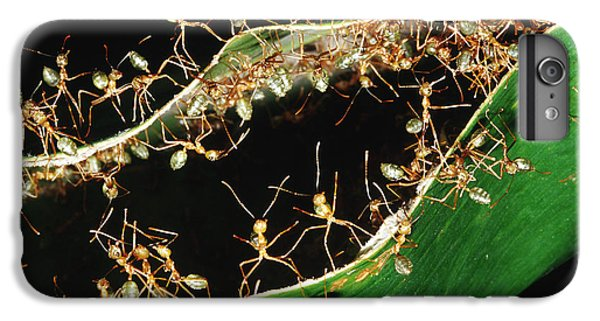 Green Tree Ants IPhone 6s Plus Case by B. G. Thomson