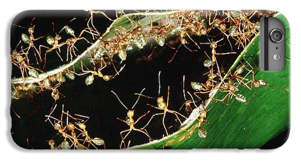 Green Tree Ants IPhone 6s Plus Case