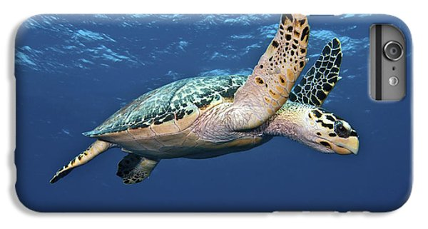 Hawksbill Sea Turtle In Mid-water IPhone 6s Plus Case