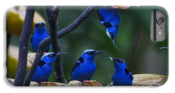 Honeycreeper IPhone 6s Plus Case by Betsy Knapp
