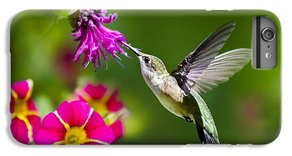 Hummingbird With Flower IPhone 6s Plus Case by Christina Rollo