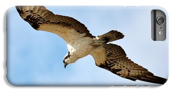 Hunter Osprey IPhone 6s Plus Case by Carol Groenen