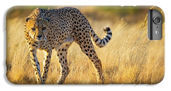 Hunting Cheetah IPhone 6s Plus Case by Inge Johnsson