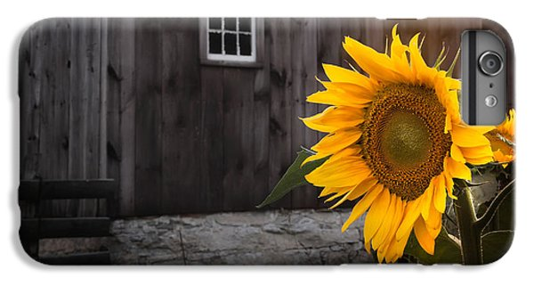 Sunflower iPhone 6s Plus Case - In The Light by Bill Wakeley