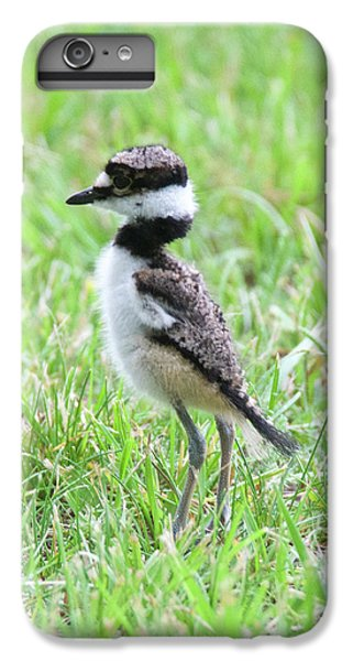 Killdeer Chick 3825 IPhone 6s Plus Case