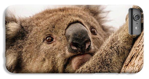 Koala 3 IPhone 6s Plus Case by Werner Padarin
