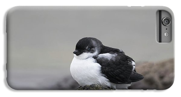 Least Auklet IPhone 6s Plus Case