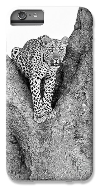 Leopard In A Tree IPhone 6s Plus Case by Richard Garvey-Williams