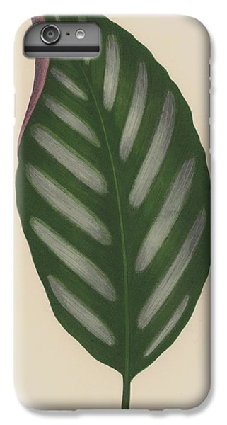 Maranta Porteana IPhone 6s Plus Case by English School