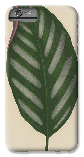 Maranta Porteana IPhone 6s Plus Case