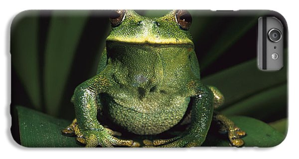 Frogs iPhone 6s Plus Case - Marsupial Frog Gastrotheca Orophylax by Pete Oxford