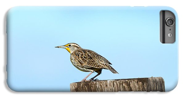 Meadowlark Roost IPhone 6s Plus Case by Mike Dawson