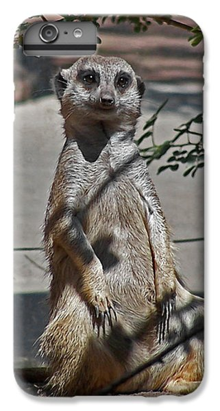 Meerkat 2 IPhone 6s Plus Case by Ernie Echols