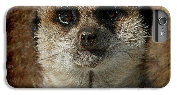 Meerkat 4 IPhone 6s Plus Case by Ernie Echols