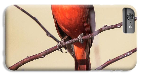 Northern Cardinal Profile IPhone 6s Plus Case