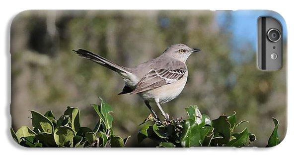 Northern Mockingbird IPhone 6s Plus Case by Carol Groenen