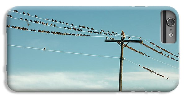 Starlings iPhone 6s Plus Case - Not Like The Others by Todd Klassy