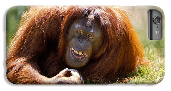 Orangutan In The Grass IPhone 6s Plus Case by Garry Gay