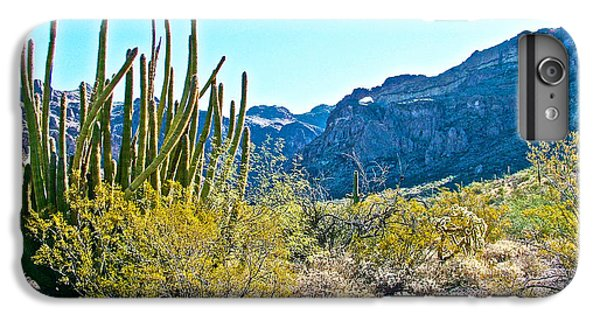 Organ Pipe Cactus In Arch Canyon In Organ Pipe Cactus National Monument-arizona  IPhone 6s Plus Case by Ruth Hager