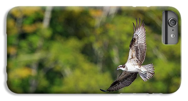 Osprey IPhone 6s Plus Case by Bill Wakeley