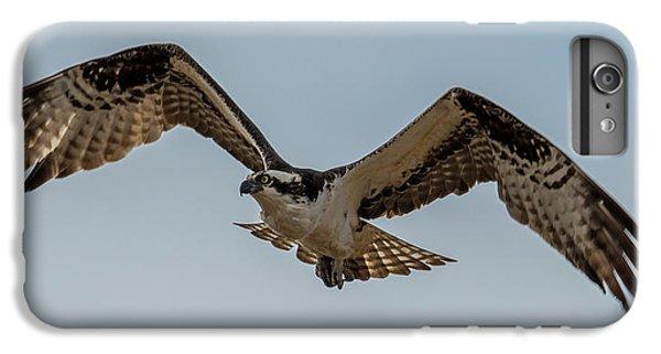 Osprey Flying IPhone 6s Plus Case by Paul Freidlund