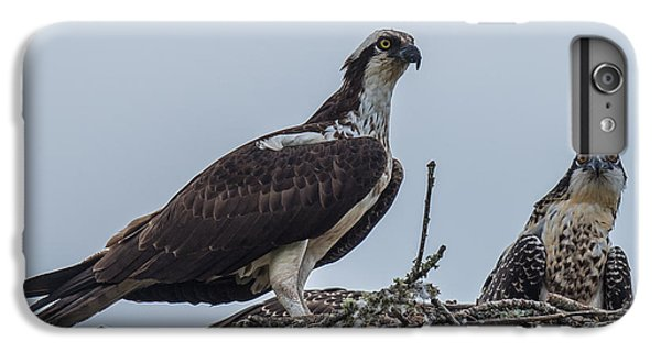 Osprey On A Nest IPhone 6s Plus Case by Paul Freidlund