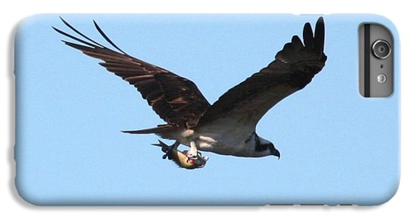 Osprey With Fish IPhone 6s Plus Case by Carol Groenen
