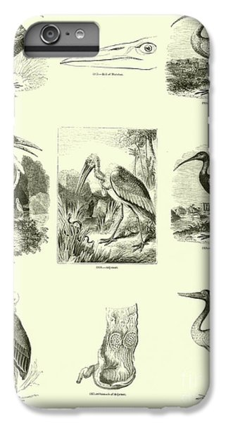 Page From The Pictorial Museum Of Animated Nature  IPhone 6s Plus Case