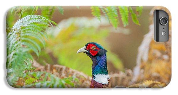 Pheasant iPhone 6s Plus Case - Pheasant Portrait by Paul Neville