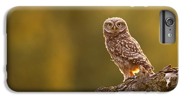 Qui, Moi? Little Owlet In Warm Light IPhone 6s Plus Case by Roeselien Raimond