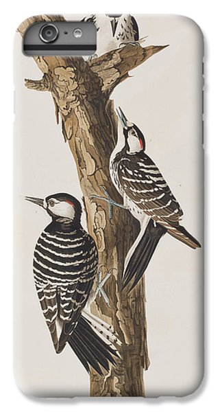 Red-cockaded Woodpecker IPhone 6s Plus Case by John James Audubon