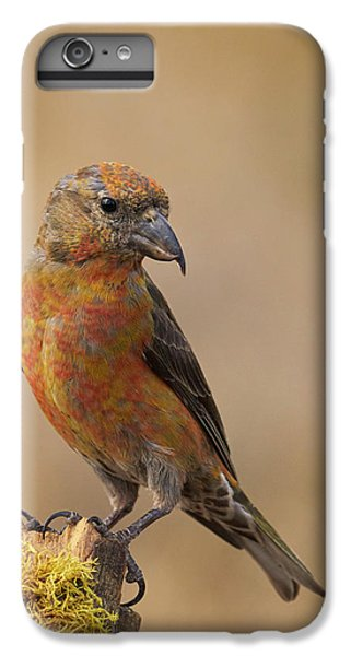 Red Crossbill IPhone 6s Plus Case by Doug Herr