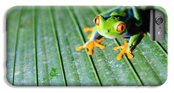 Frogs iPhone 6s Plus Case - Red Eyed Frog Close Up by Matteo Colombo