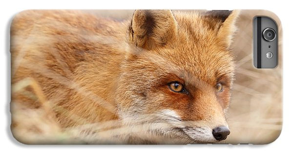 Fox iPhone 6s Plus Case - Red Fox On The Hunt by Roeselien Raimond
