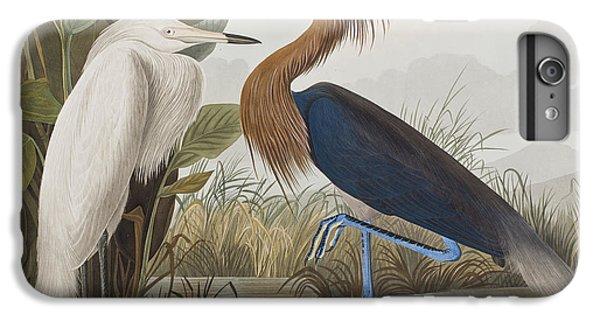 Reddish Egret IPhone 6s Plus Case by John James Audubon