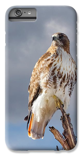 Redtail Portrait IPhone 6s Plus Case by Bill Wakeley