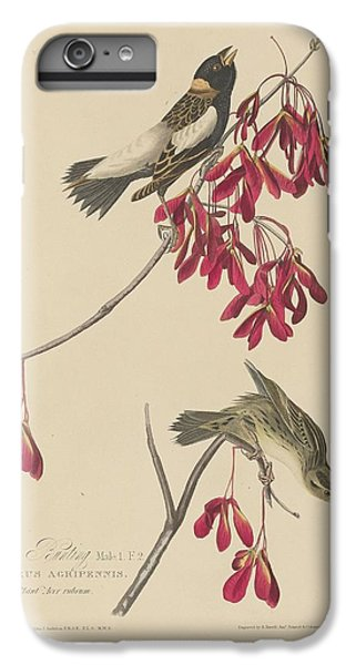 Rice Bunting IPhone 6s Plus Case by Dreyer Wildlife Print Collections