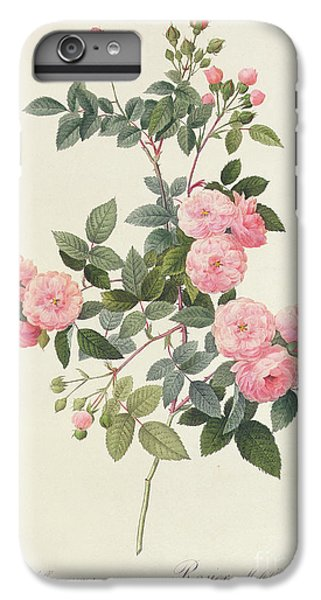 Garden Snake iPhone 6s Plus Case - Rosa Multiflora Carnea by Pierre Joseph Redoute