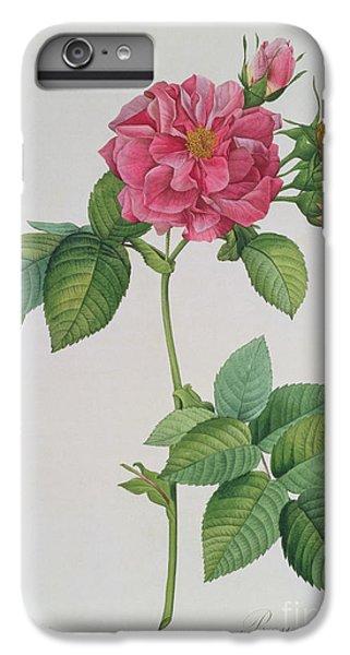 Rose iPhone 6s Plus Case - Rosa Turbinata by Pierre Joseph Redoute