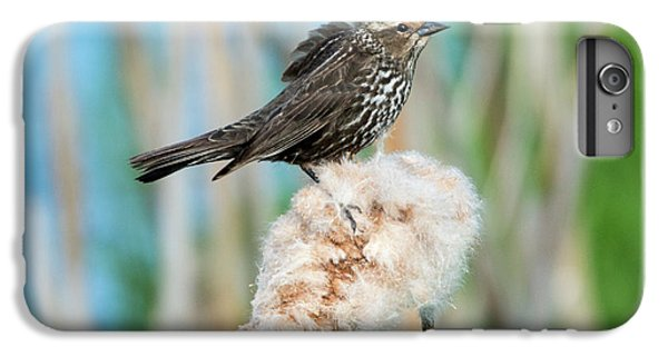 Ruffled Feathers IPhone 6s Plus Case by Mike Dawson