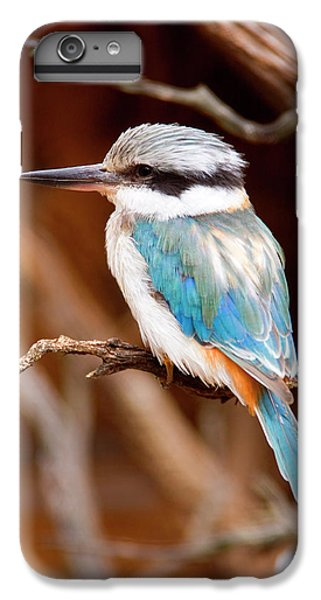 Kingfisher iPhone 6s Plus Case - Sacred Kingfisher by Mike  Dawson