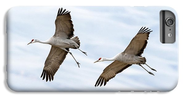 Sandhill Crane Approach IPhone 6s Plus Case by Mike Dawson