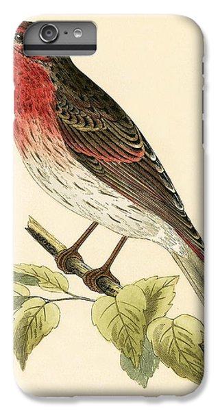 Scarlet iPhone 6s Plus Case - Scarlet Bullfinch by English School