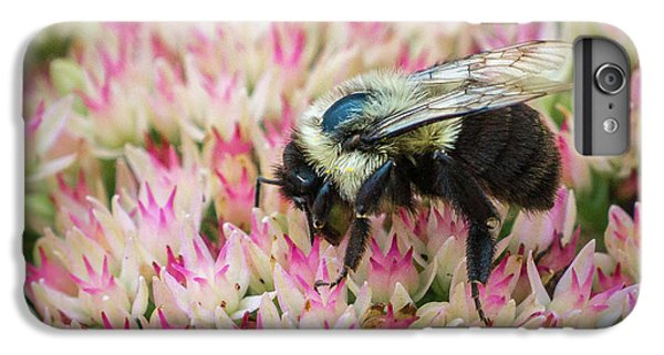 IPhone 6s Plus Case featuring the photograph Sedum Bumbler by Bill Pevlor