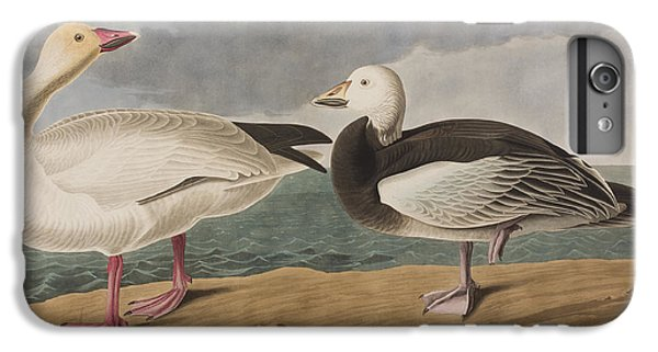Snow Goose IPhone 6s Plus Case by John James Audubon