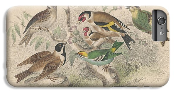 Songbirds IPhone 6s Plus Case by Dreyer Wildlife Print Collections