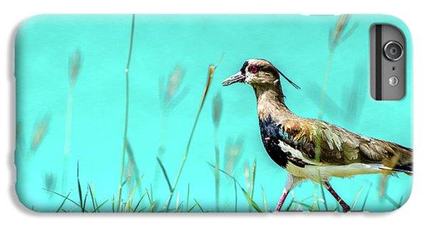 Lapwing iPhone 6s Plus Case - Southern Lapwing by Randy Scherkenbach